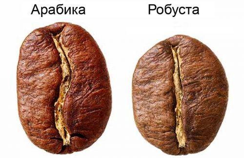Кофейные зерна сортов Арабика и Робуста