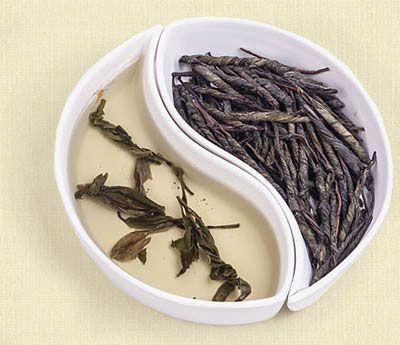 Скрученные листья чая кудин