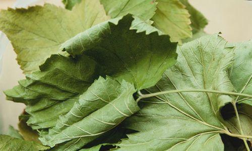 Высушенные смородиновые листья