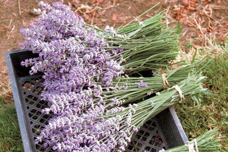 Подготовка трав к сушке