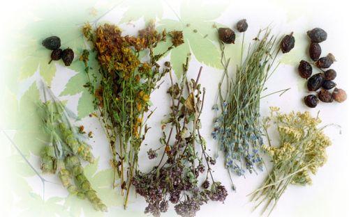 Травяной сбор для чая