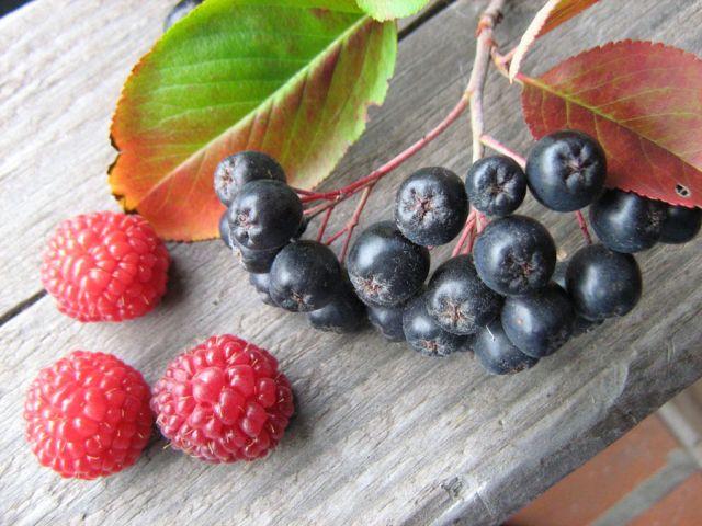 Малина и черноплодка