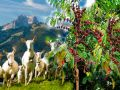 Кофейные деревья в дикой природе