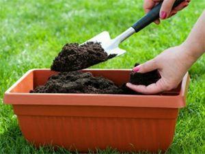 Земля для посадки растений